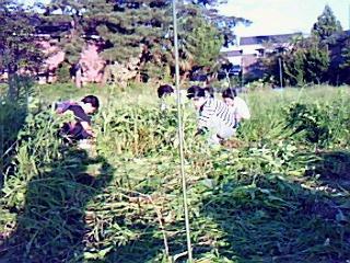 ふるさとワーク、早稲田ロドリゲスチーム果樹園の草刈り