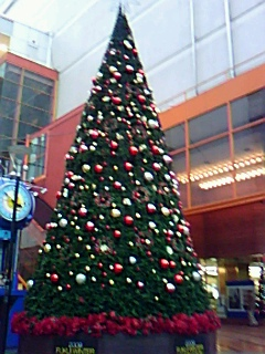 福井の街角を飾るクリスマスツリー