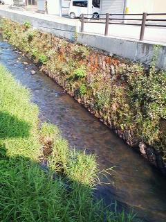 河和田なかみち通りの川べり