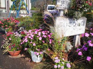 公民館祭りを盛り上げる植木鉢